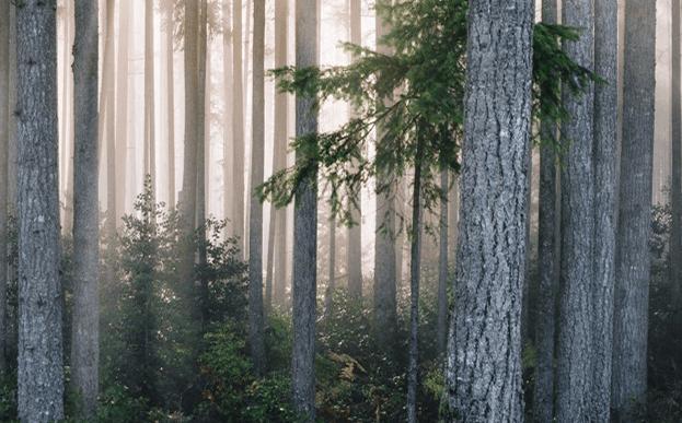 Natuur als raadgever